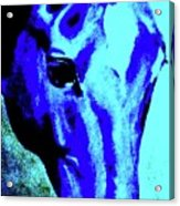 horse portrait RED wow blue Acrylic Print