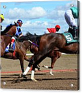 Horse Power 6 Acrylic Print
