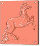 Horse Prancing Acrylic Print