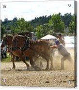 Horse Pulling Team Acrylic Print