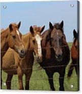 Horse Quartet Acrylic Print