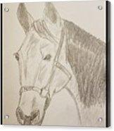 Rosie The Horse Acrylic Print