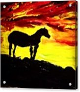 Horse Rider In The Sunset Acrylic Print