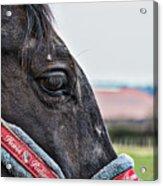 Horse Riding Horse Acrylic Print