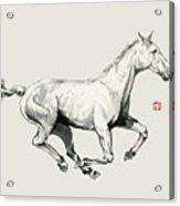 Horse - 5 Acrylic Print