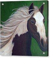 Horse Run Acrylic Print