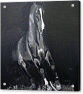 Horse Running Along The Shore Acrylic Print
