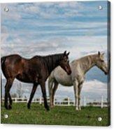 Horses #2 Acrylic Print