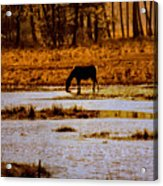 Horse Silhouetted Acrylic Print