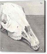 Horse Skull Acrylic Print