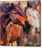 Horse Snuggle Acrylic Print