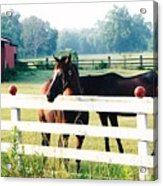Horse Stable Acrylic Print