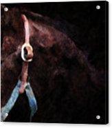 Horse Study #3 Acrylic Print