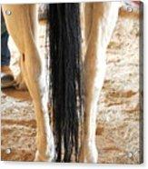Horse Tail. Acrylic Print