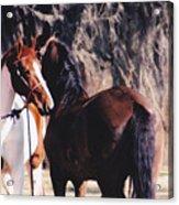 Horse Talk Acrylic Print