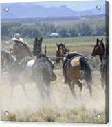 Horse Thief Acrylic Print