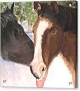 Horse Whisperer Acrylic Print