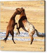 Horseplay Acrylic Print