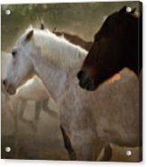 Horses-02 Acrylic Print