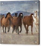 Horses-03 Acrylic Print