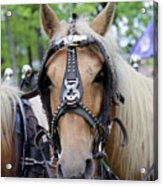 Horses 2 Acrylic Print
