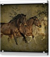 Horses 30 Acrylic Print