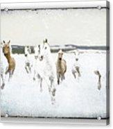 Horses 33 Acrylic Print