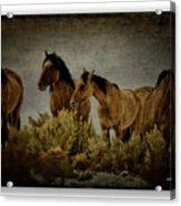 Horses 34 Acrylic Print