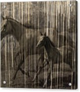Horses Abstract Mare And Foal Acrylic Print