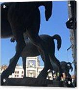 Horses Asses Acrylic Print