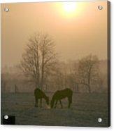 Horses At Sunrise-1 Acrylic Print