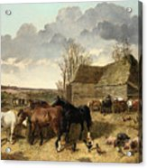 Horses Eating From A Manger, With Pigs And Chickens In A Farmyard Acrylic Print