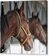 Horses For Sale Acrylic Print