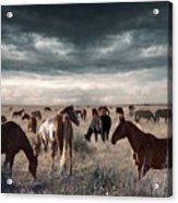 Horses Forever Acrylic Print