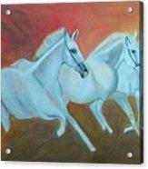 Horses Gone Wild Acrylic Print