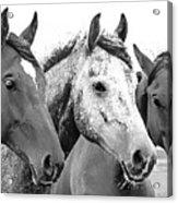 Horses - Id 16217-202749-4749 Acrylic Print
