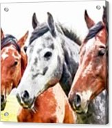 Horses - Id 16217-202757-3803 Acrylic Print