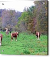 Horses In Autumn Amish Country Acrylic Print