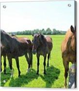 Horses In Bridgehampton Acrylic Print