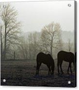 Horses In Field Acrylic Print