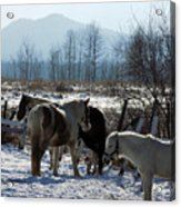 Horses In Front Of Quaggy Jo Acrylic Print
