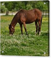 Horses In The Meadow 2 Acrylic Print