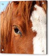 Horse's Mane Acrylic Print