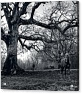Horses On A Foggy Morning In Black And White Acrylic Print