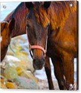 Horses On Jost  Acrylic Print