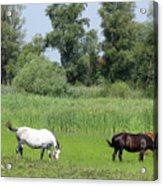 Horses On Pasture Nature Farm Scene Acrylic Print