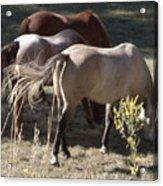 Horses Paradise Valley Acrylic Print
