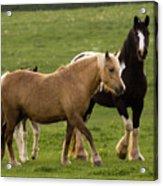 Horses Photography Acrylic Print
