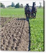 Horses Plowing Rows Two  Acrylic Print