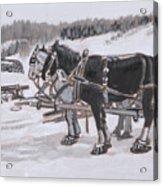 Horses Wearing Snowshoes Historical Vignette Acrylic Print